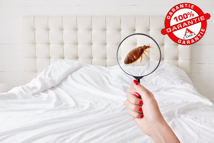 Bettwanzen Bekämpfung